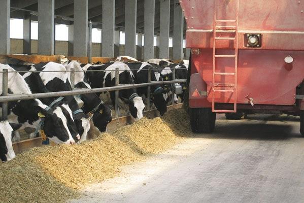 JOSERA Rinder im Futterständer